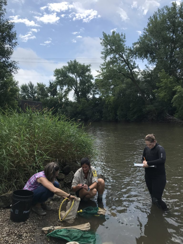 Madeline Pletta (center), a mussel propagation biologist with the Minnesota DNR's Ecological and Water Resources division, works with others July 18, 2019, on reintroducing black sandshell mussels to the Cedar River State Water Trail in Austin.