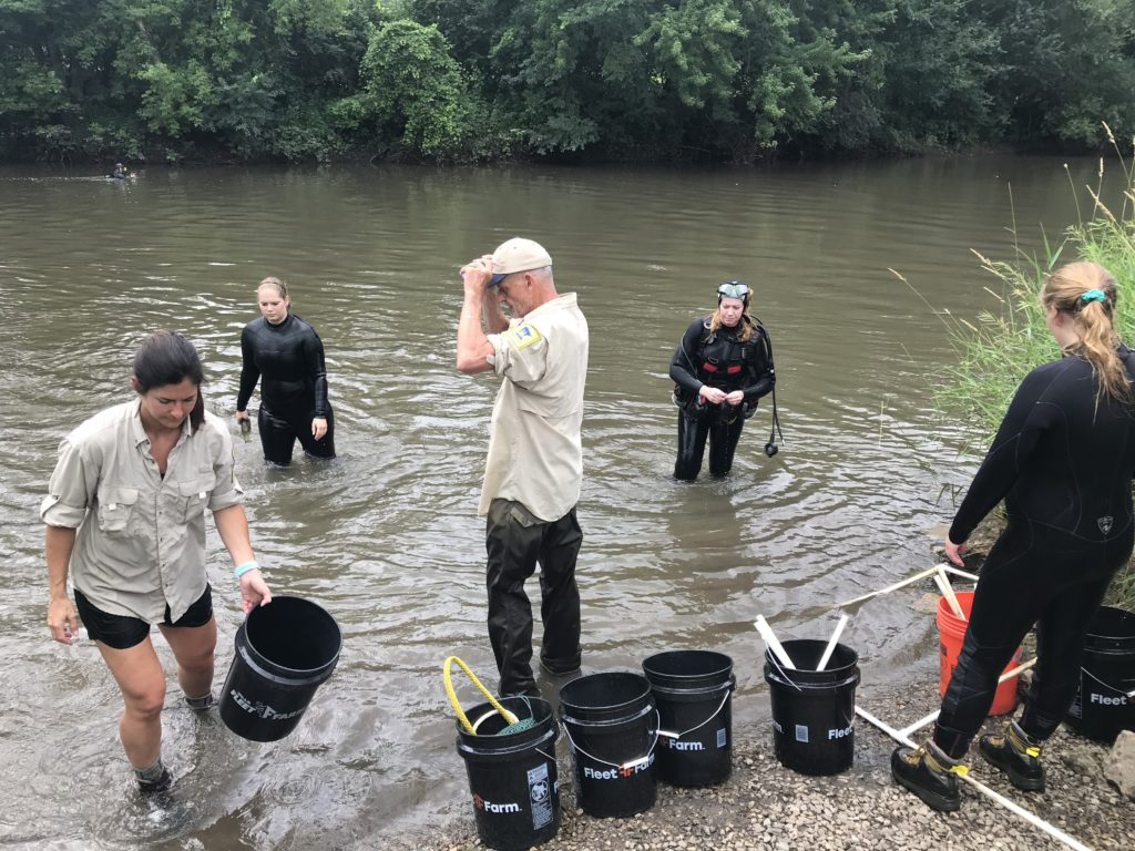 Minnesota Department of Natural Resources crew members finish reintroducing black sandshell mussels at the first of three sites July 18, 2019, on the Cedar River State Water Trail in Austin. The other two were located south of Austin in Austin and Lyle townships.